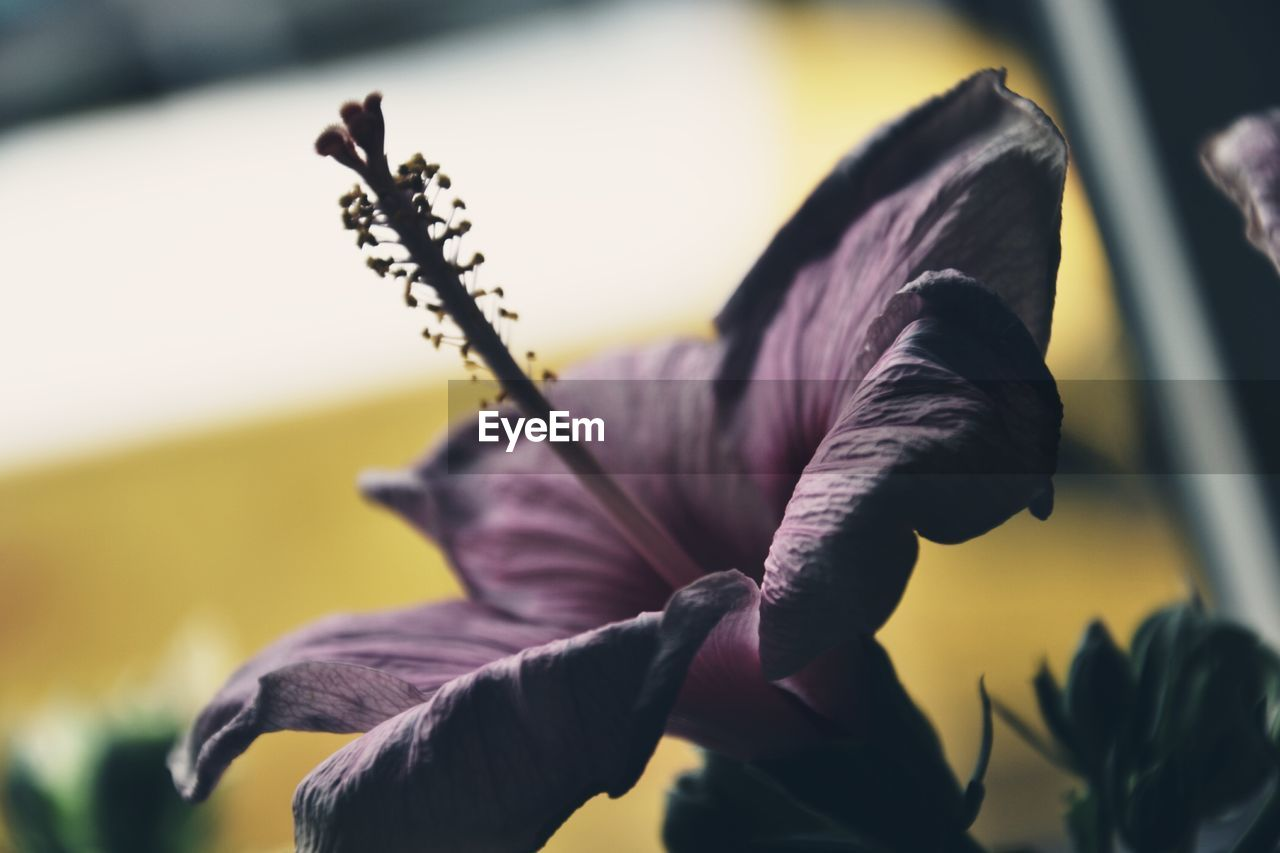 plant, flowering plant, flower, close-up, beauty in nature, vulnerability, growth, fragility, freshness, flower head, inflorescence, petal, focus on foreground, nature, no people, purple, outdoors, selective focus, day, iris - plant