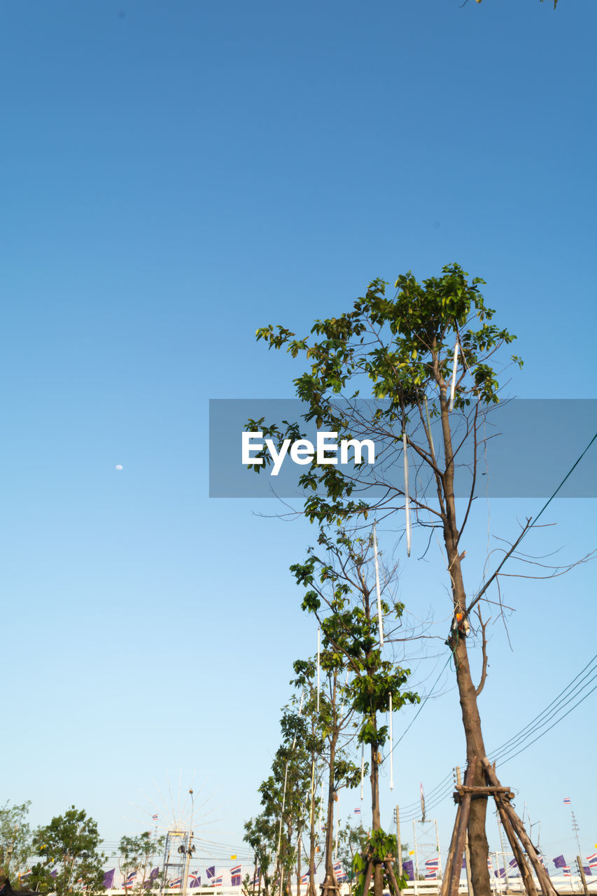 tree, blue, clear sky, nature, no people, growth, day, branch, outdoors, beauty in nature, sky