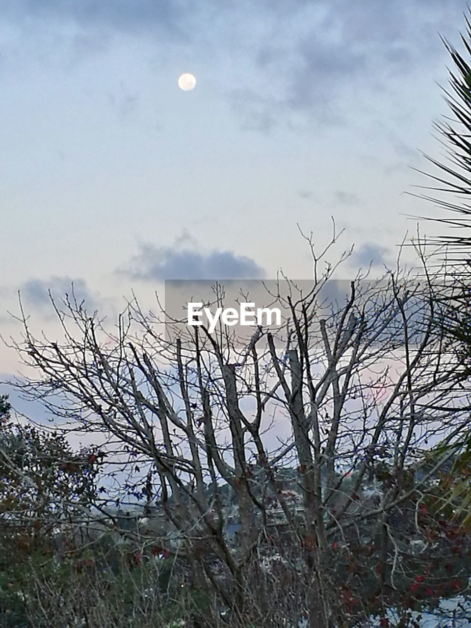 sky, plant, tree, bare tree, tranquility, nature, no people, cloud - sky, tranquil scene, beauty in nature, branch, scenics - nature, water, day, outdoors, winter, growth, moon, cold temperature