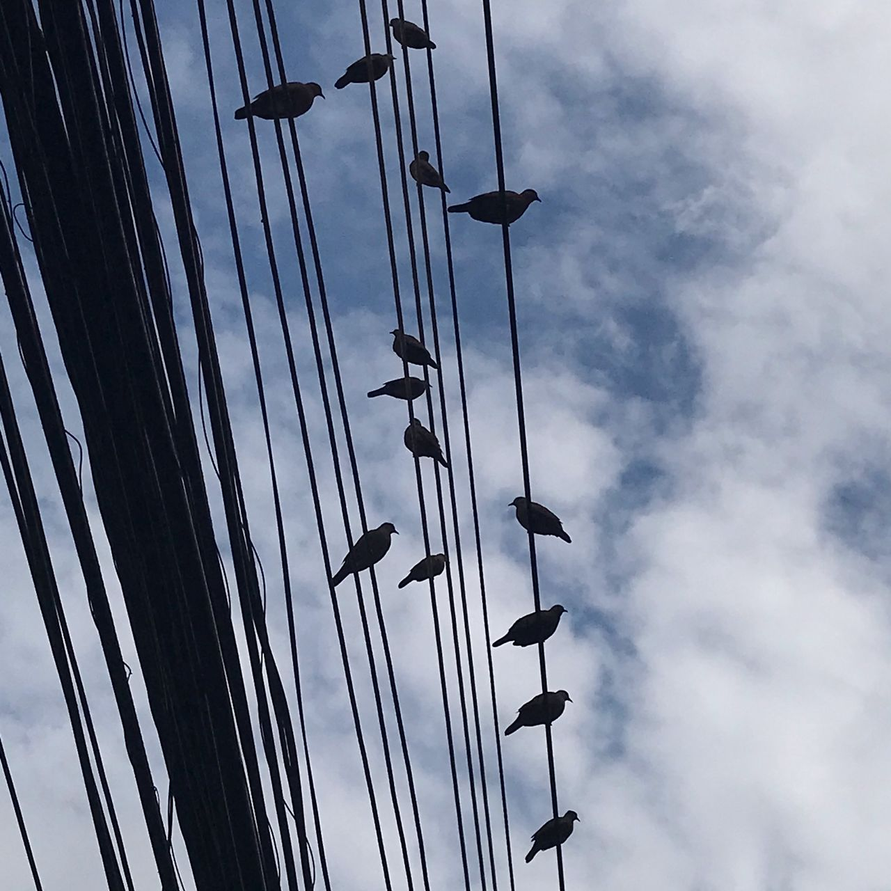 sky, cloud - sky, low angle view, day, nature, no people, outdoors, mast, vertebrate, pole, bird, sailboat, in a row, animal, animal themes, silhouette, group of animals, animals in the wild, perching, rope, directly below