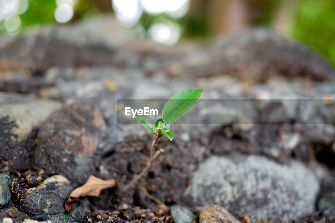 leaf, plant part, growth, nature, green color, plant, seedling, beginnings, day, close-up, no people, beauty in nature, new life, sapling, focus on foreground, outdoors, selective focus, small, vulnerability, botany