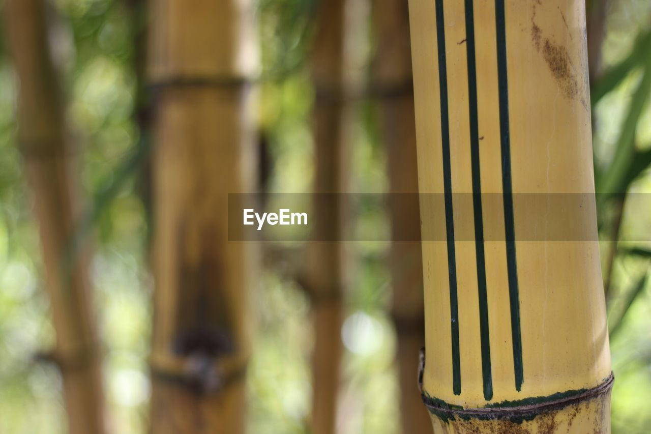 focus on foreground, metal, day, close-up, no people, bamboo - plant, outdoors, bamboo, tree, plant, selective focus, nature, security, boundary, safety, growth, barrier, pattern, protection, fence, architectural column