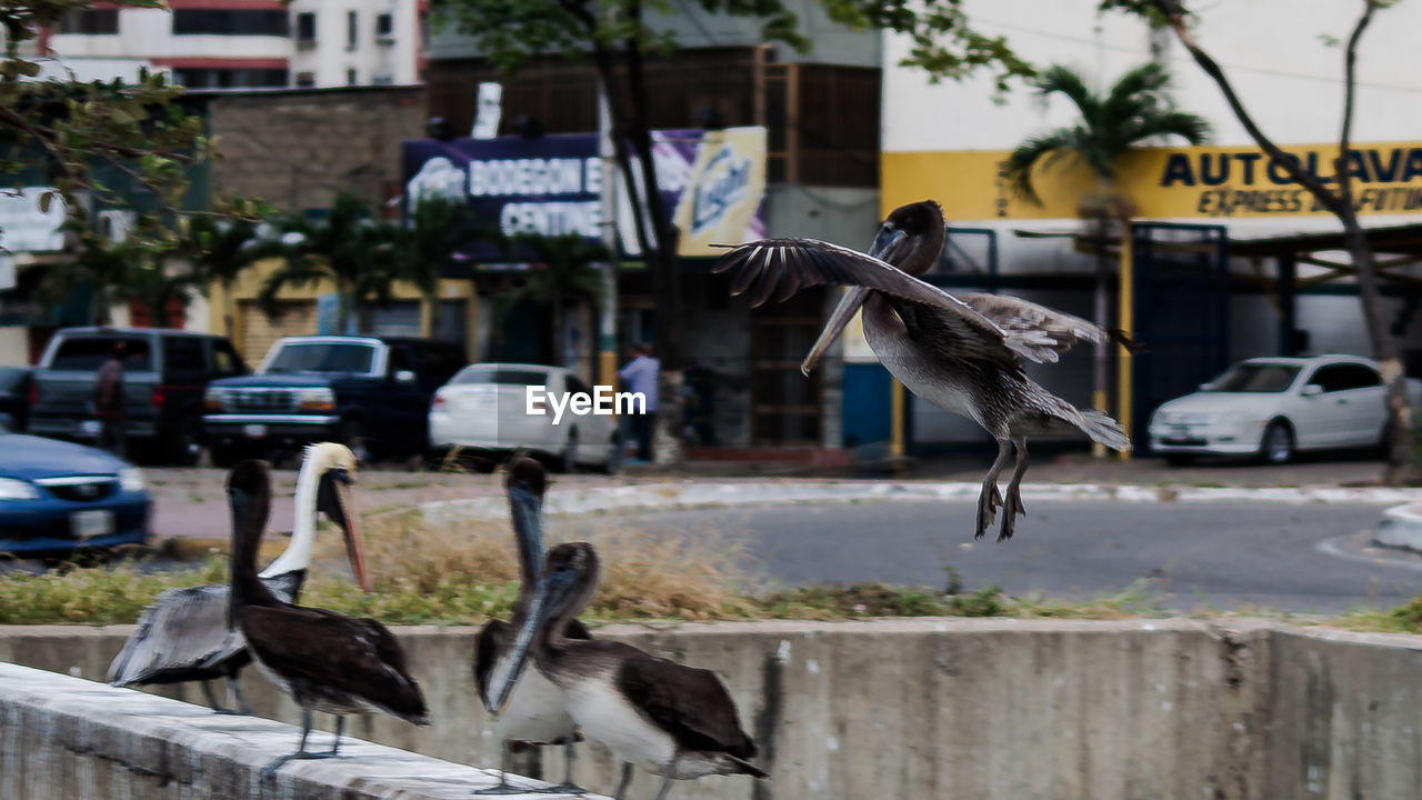 bird, animal themes, animals in the wild, animal wildlife, transportation, mode of transport, outdoors, land vehicle, day, car, building exterior, built structure, architecture, no people, spread wings, gray heron, nature, perching, city