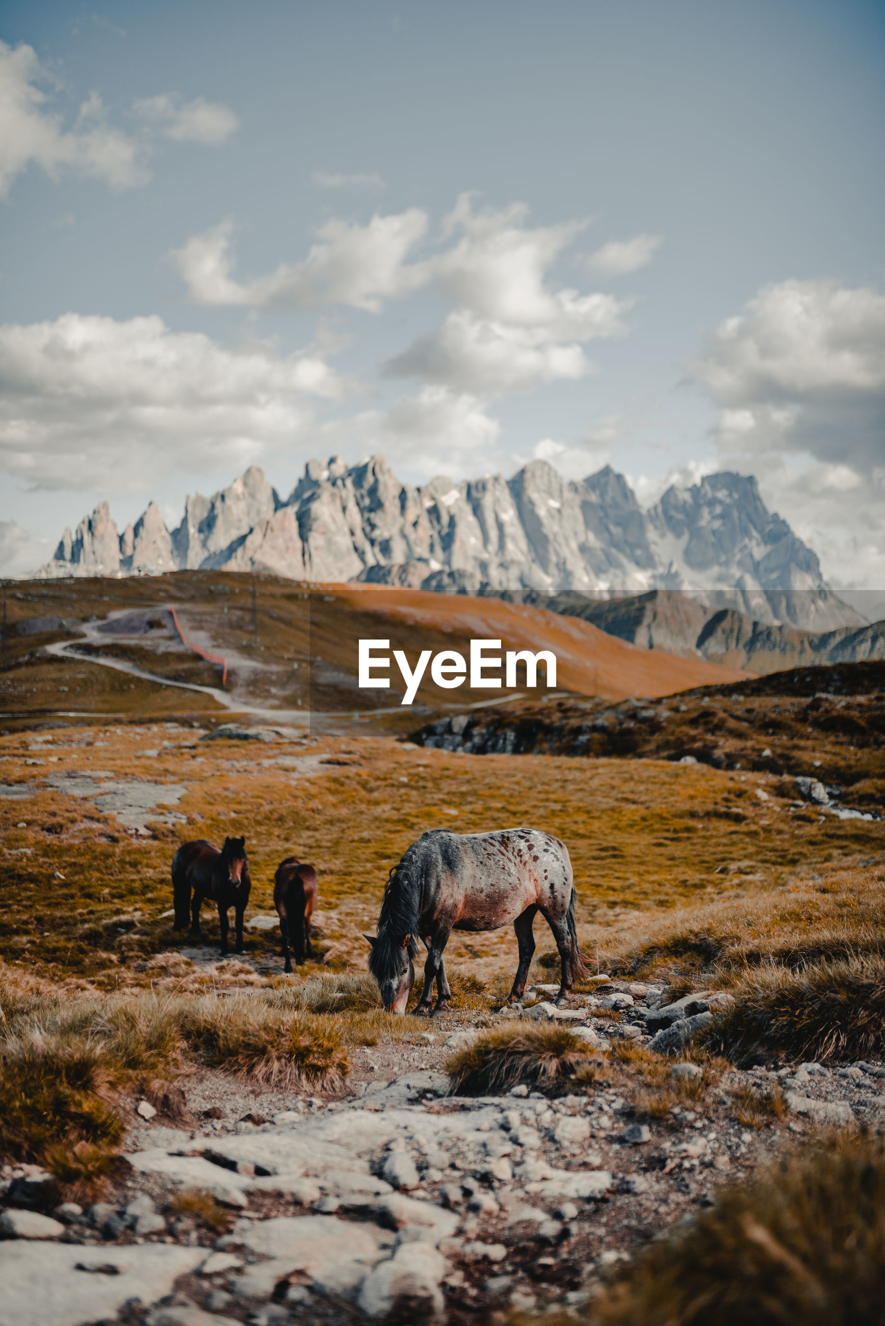 Horses on field against mountain