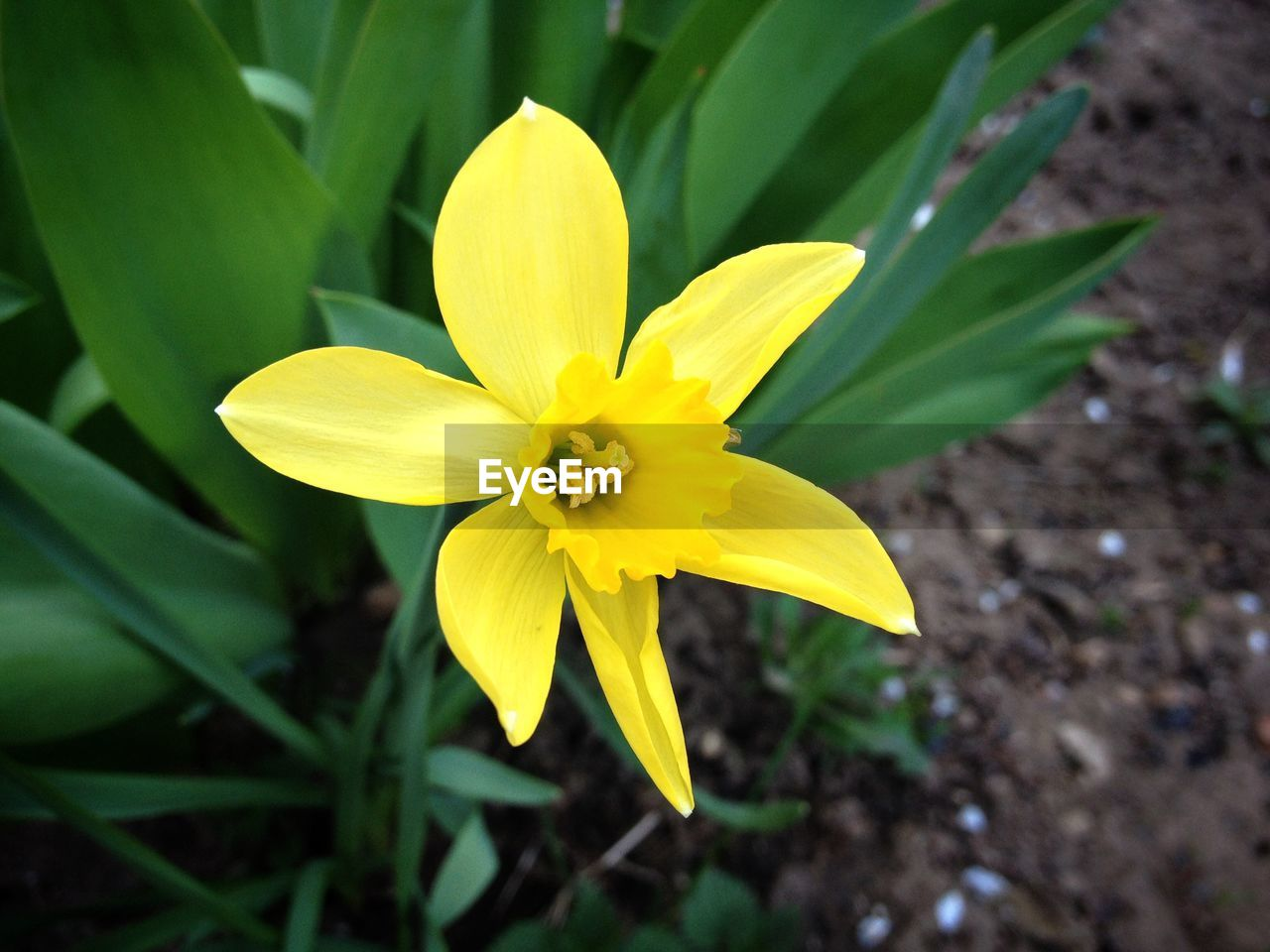 flower, petal, fragility, yellow, flower head, freshness, nature, beauty in nature, growth, blooming, plant, close-up, outdoors, day, leaf, no people, frangipani, crocus