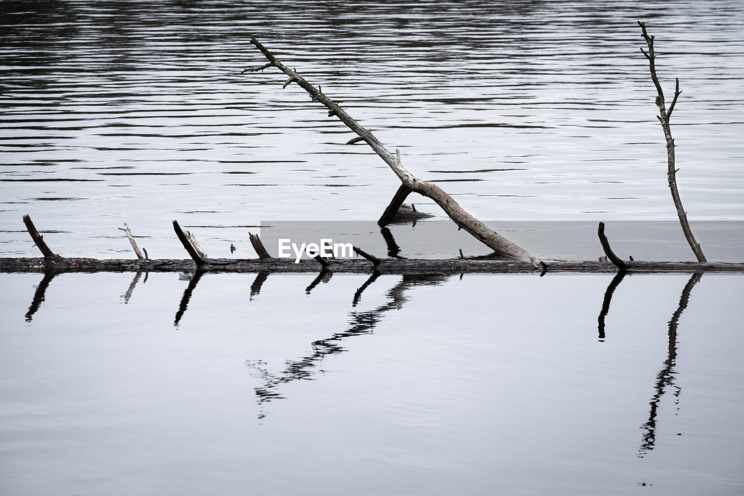 Driftwood floating in lake