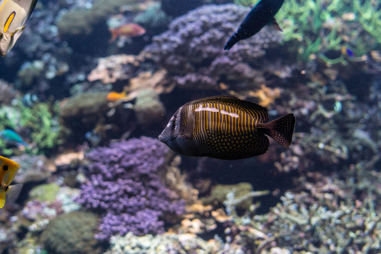 animal wildlife, animals in the wild, animal themes, animal, fish, vertebrate, swimming, sea life, sea, marine, underwater, water, animals in captivity, group of animals, tank, aquarium, no people, undersea, school of fish