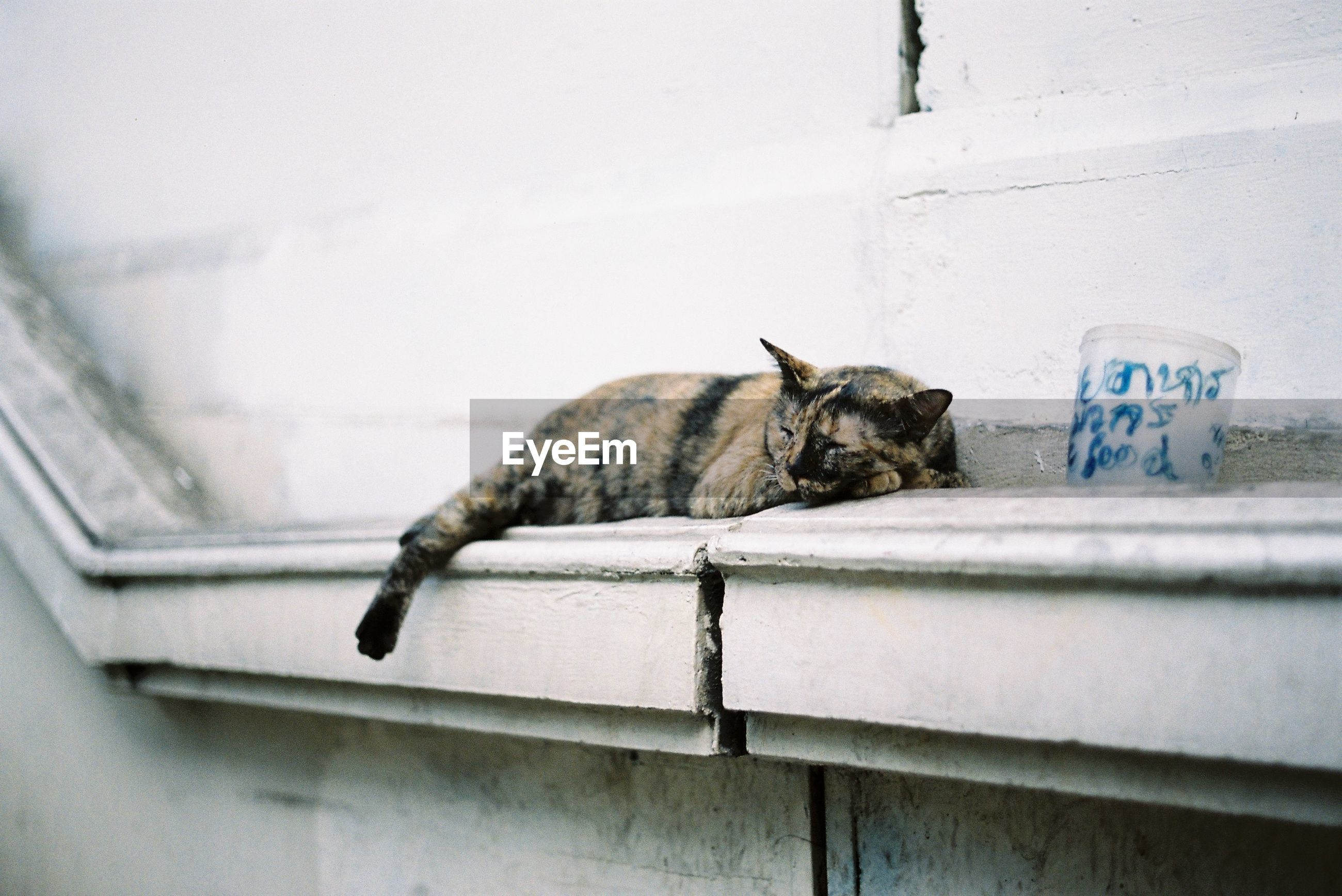 CAT RESTING IN A WALL