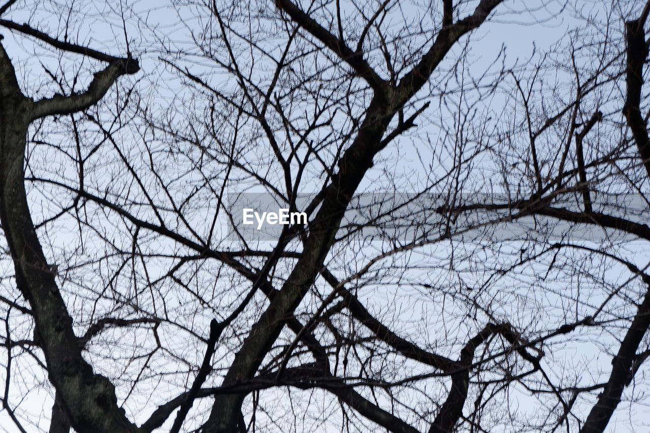 tree, branch, bare tree, plant, low angle view, sky, no people, nature, tranquility, winter, beauty in nature, day, outdoors, cold temperature, backgrounds, scenics - nature, silhouette, tree trunk, trunk, tree canopy