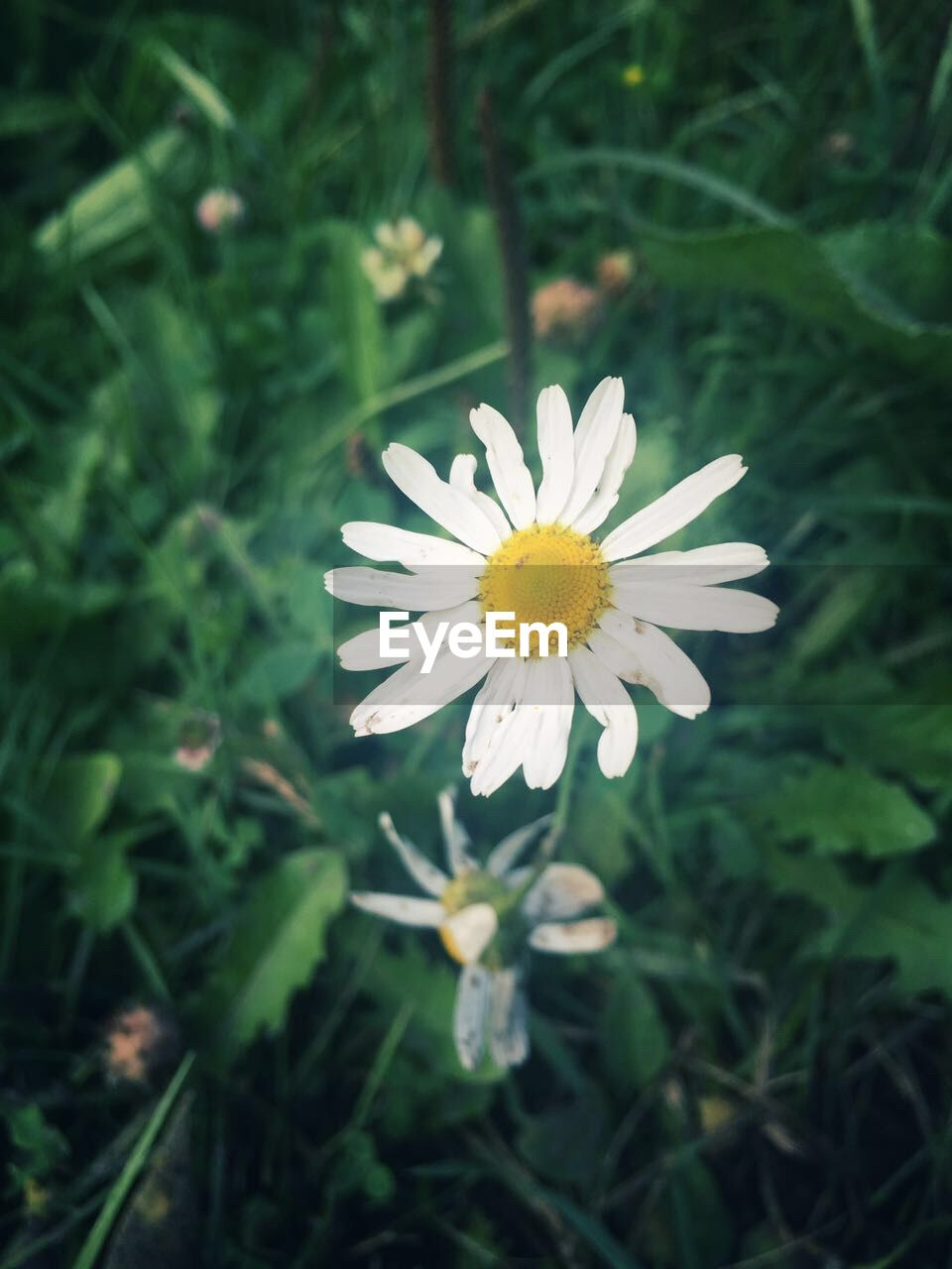 flower, growth, nature, petal, beauty in nature, blooming, white color, plant, fragility, freshness, flower head, yellow, outdoors, no people, close-up, day