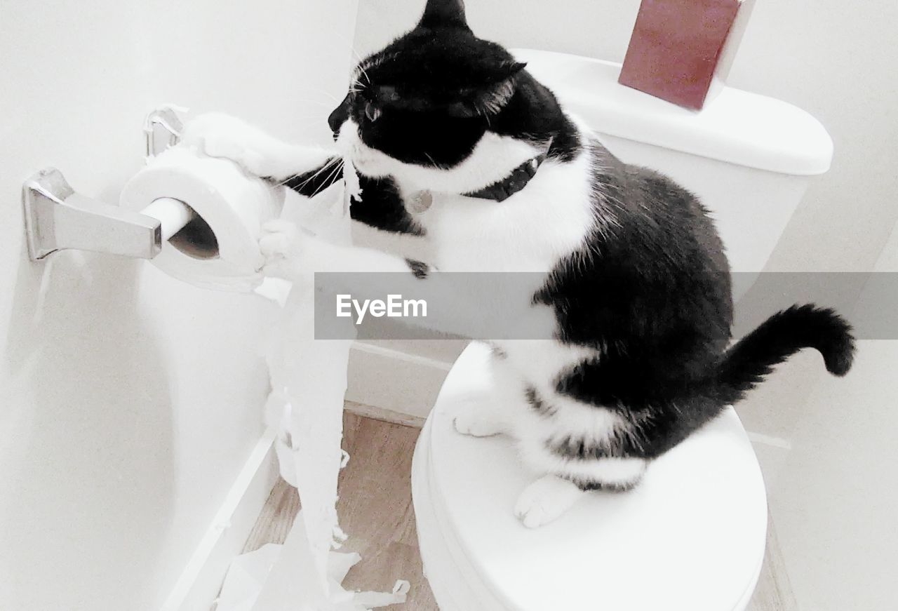 High Angle View Of Cat On Toilet Seat Playing With Tissue In Bathroom