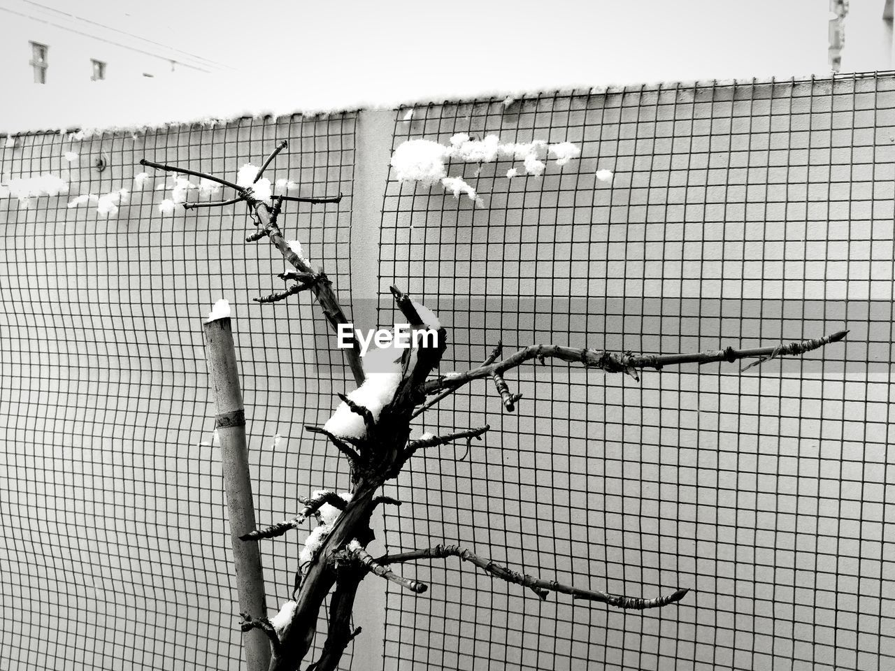 chainlink fence, day, safety, no people, animal themes, protection, outdoors, barbed wire, close-up, sky, nature, bird