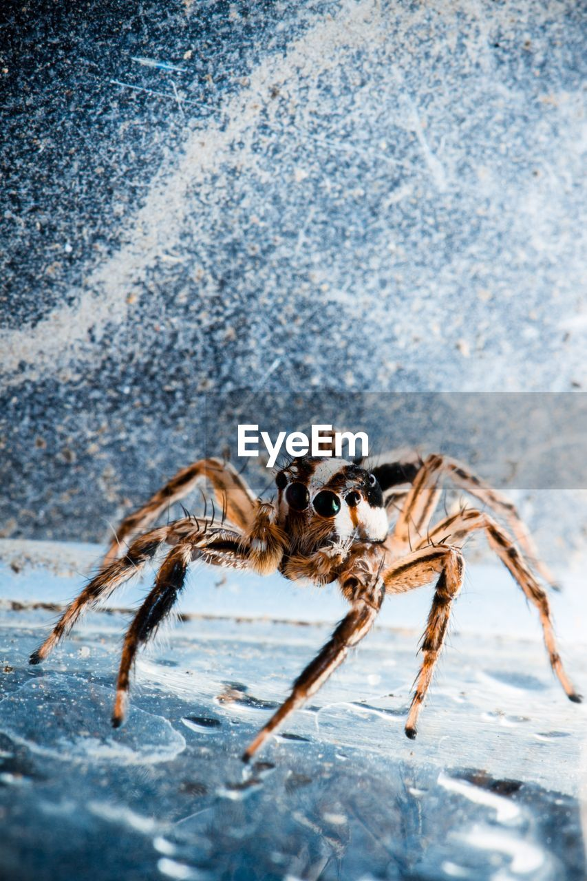 animal themes, animal, one animal, animal wildlife, animals in the wild, invertebrate, insect, arachnid, spider, zoology, day, arthropod, outdoors, animal body part, full length, nature, close-up, no people, crab, sea, marine
