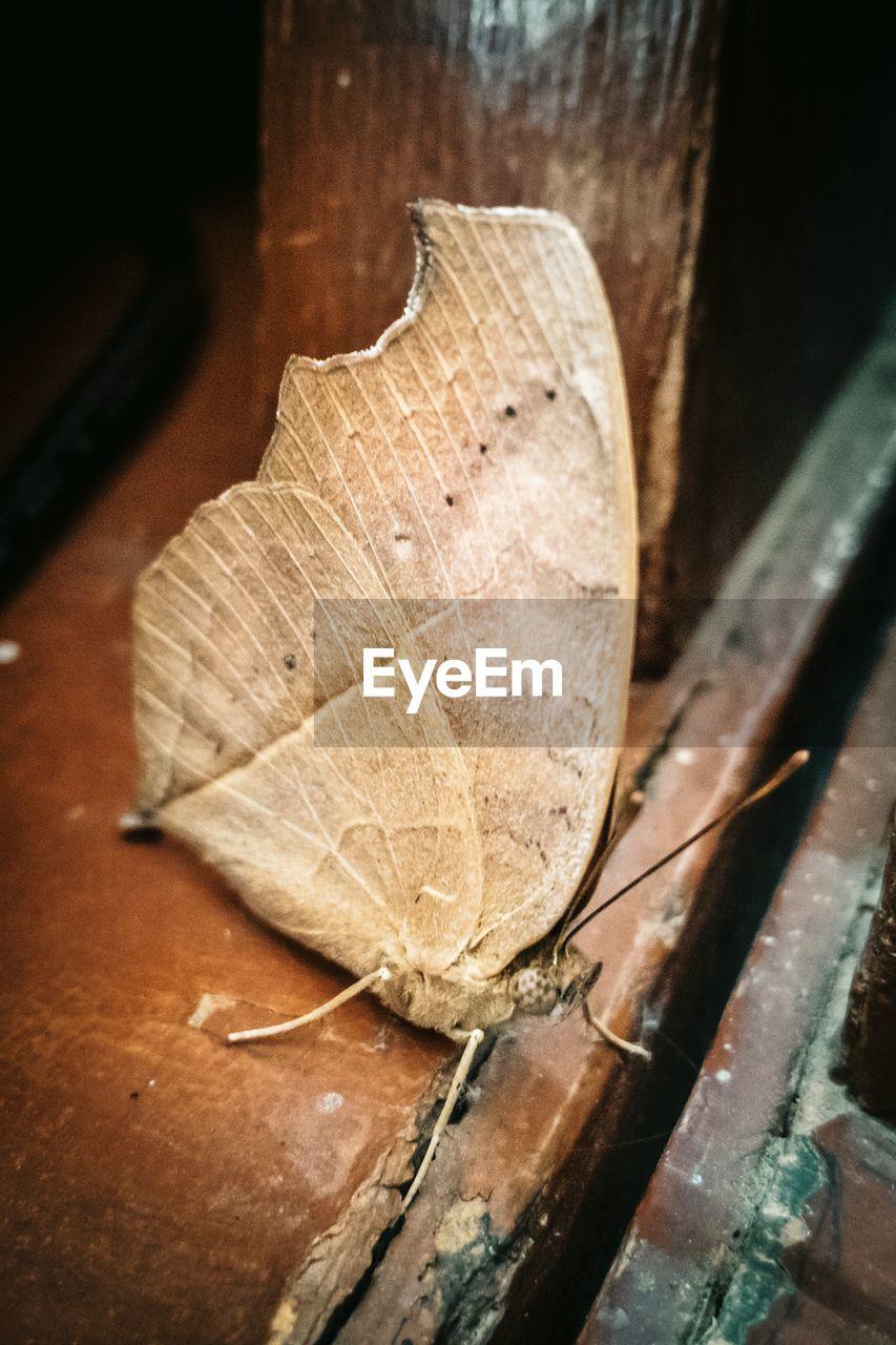 close-up, plant part, leaf, no people, wood - material, dry, selective focus, still life, day, high angle view, indoors, table, nature, fragility, focus on foreground, vulnerability, leaf vein, brown, change, dried, natural condition