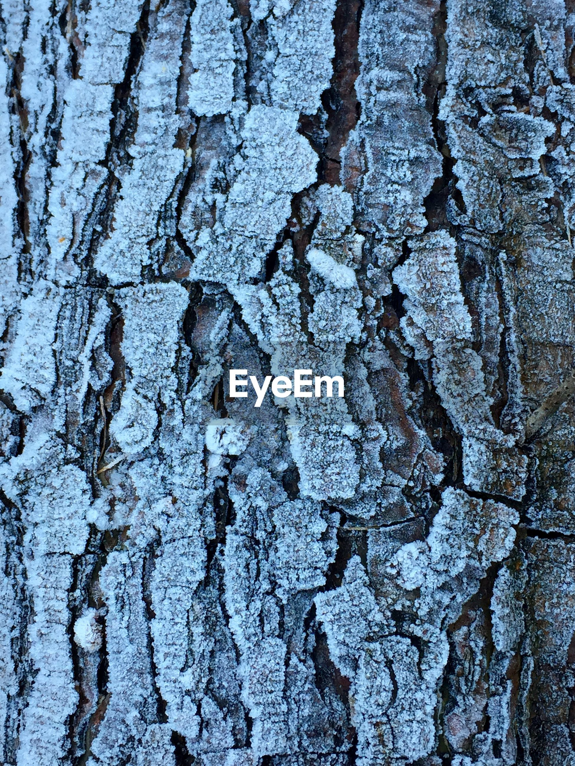 textured, full frame, backgrounds, rough, tree trunk, close-up, bark, weathered, pattern, detail, tree, cracked, natural pattern, wood - material, day, no people, outdoors, nature, old, part of