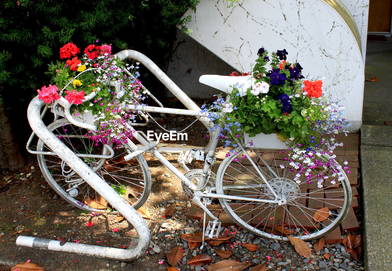 High angle view of flowers blooming on bicycle