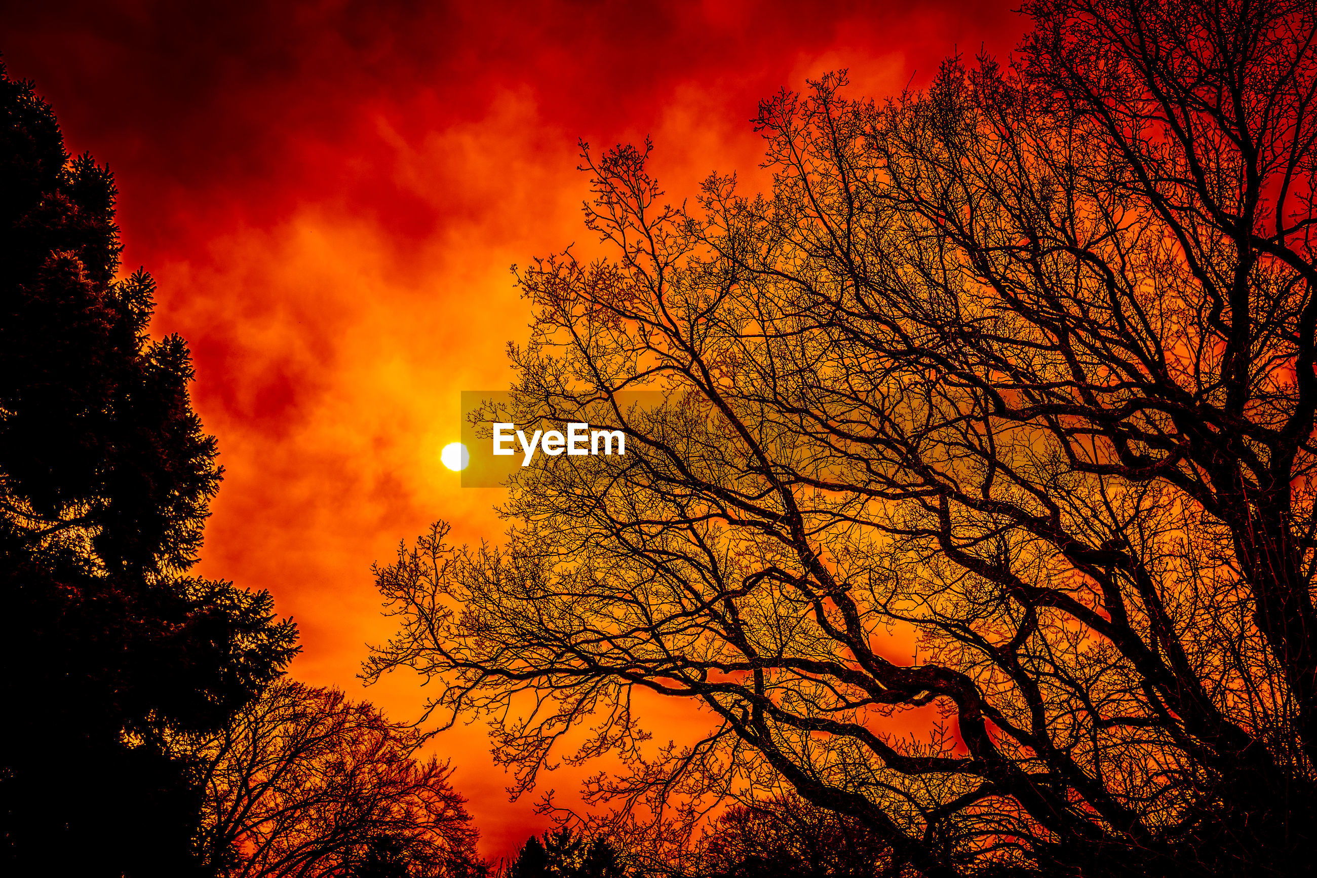 orange color, tree, moon, beauty in nature, nature, sunset, low angle view, tranquil scene, scenics, tranquility, bare tree, branch, outdoors, silhouette, autumn, sky, sun, red, no people, astronomy