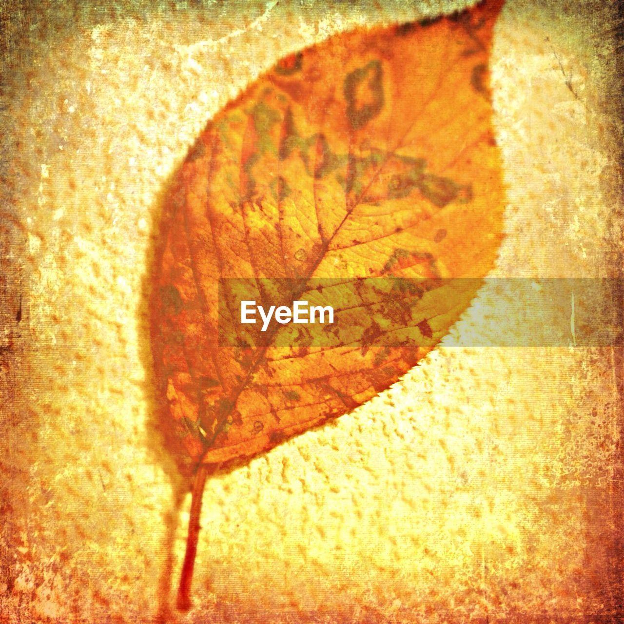 Close up of dry leaf