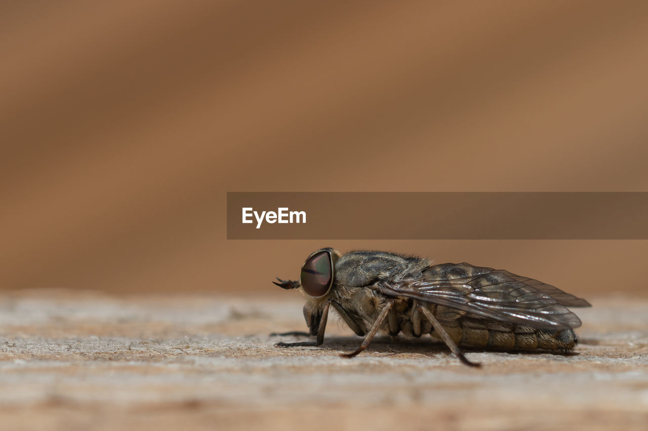 invertebrate, animal themes, animal, animal wildlife, insect, animals in the wild, one animal, selective focus, close-up, no people, day, nature, zoology, outdoors, animal wing, fly, arthropod, copy space, full length, housefly
