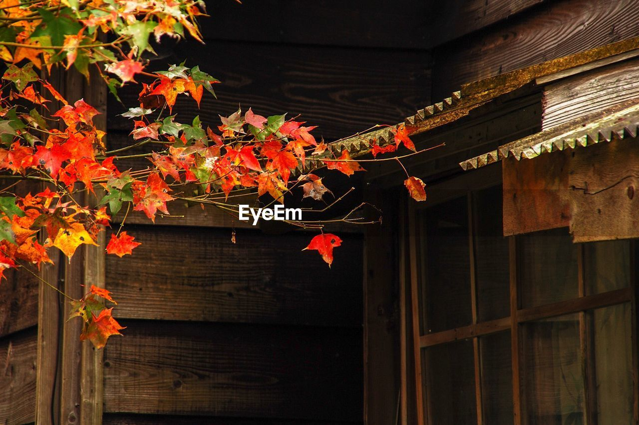 architecture, no people, built structure, building exterior, plant, autumn, building, wood - material, day, nature, roof, orange color, change, outdoors, house, low angle view, red, beauty in nature, plant part, leaf, maple leaf