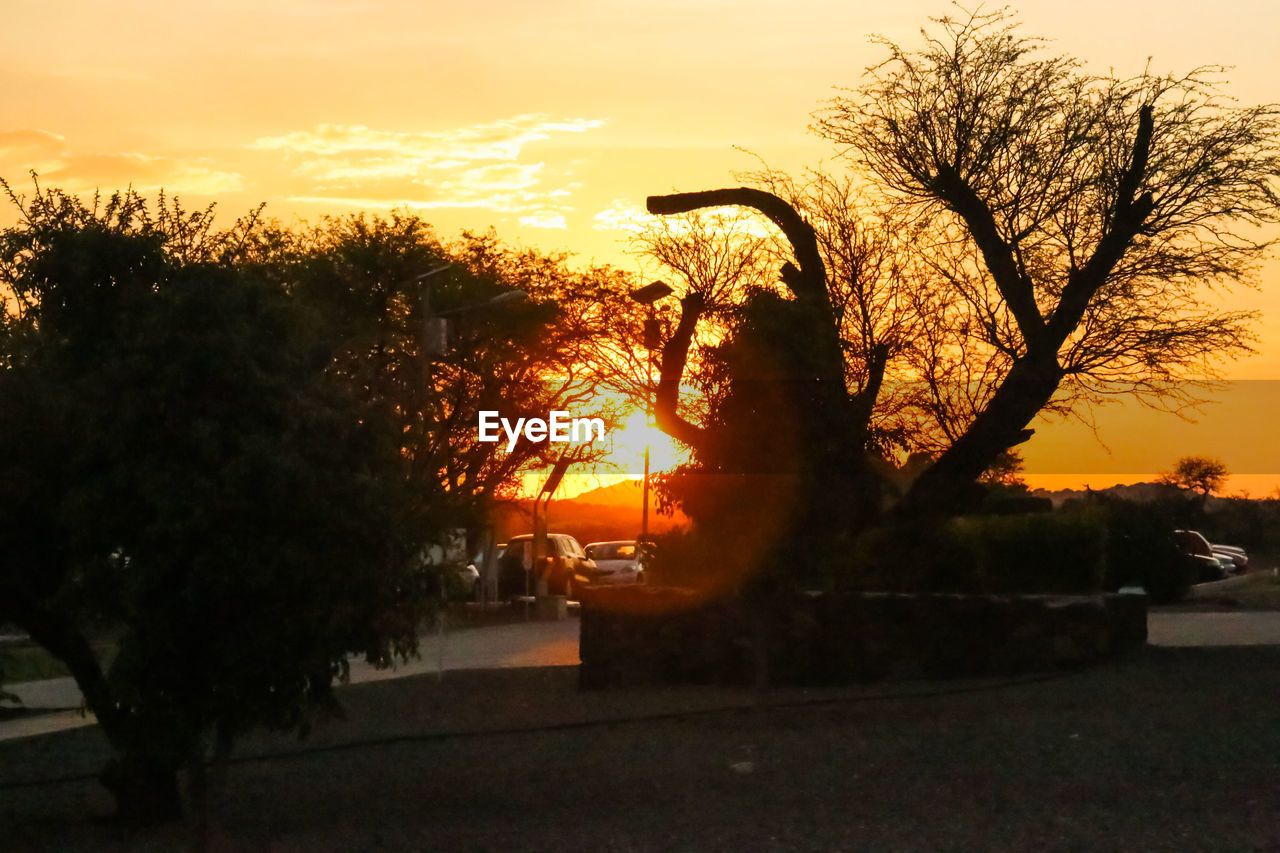 sunset, tree, orange color, silhouette, outdoors, sky, nature, scenics, no people, beauty in nature, city, day