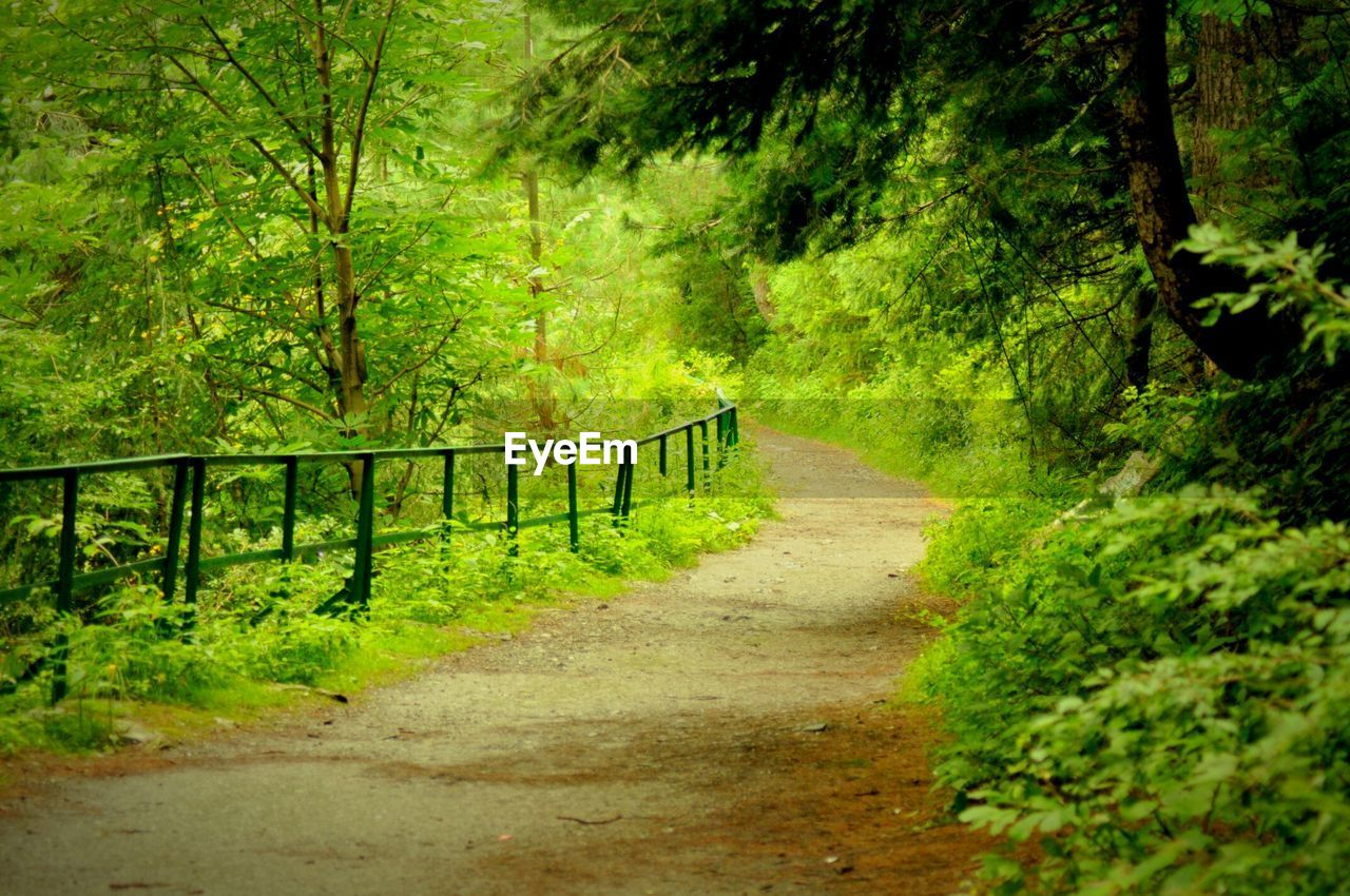 railing, nature, tree, green color, single lane road, the way forward, no people, outdoors, landscape, scenics, day, beauty in nature