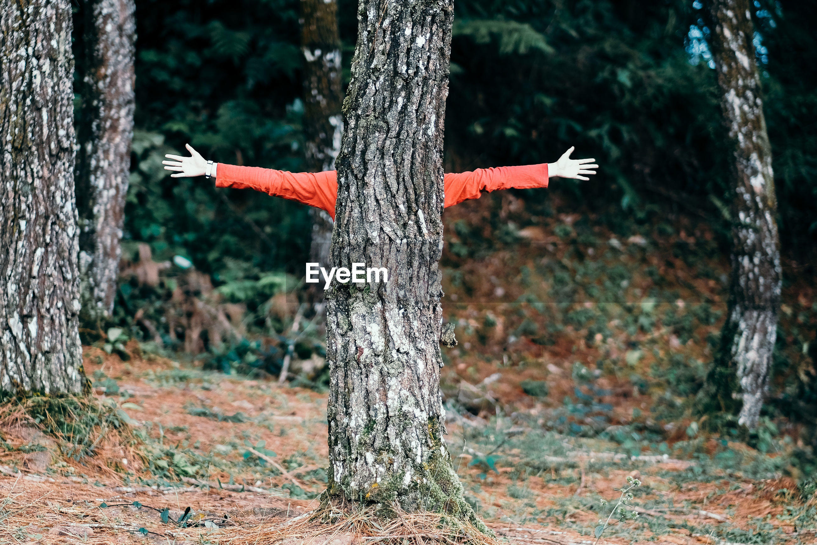 Person with arms outstretched standing against tree in forest