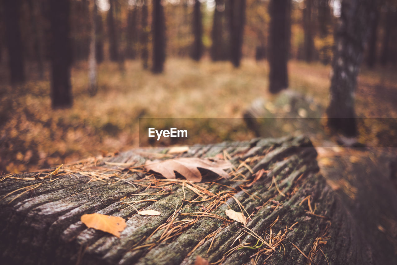 Surface level of fallen leaves on tree trunk on field in forest