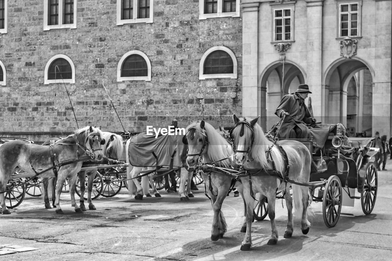 working animal, animal themes, horse, domestic animals, horsedrawn, carriage, horse cart, mammal, building exterior, built structure, outdoors, architecture, transportation, real people, history, day, livestock, city