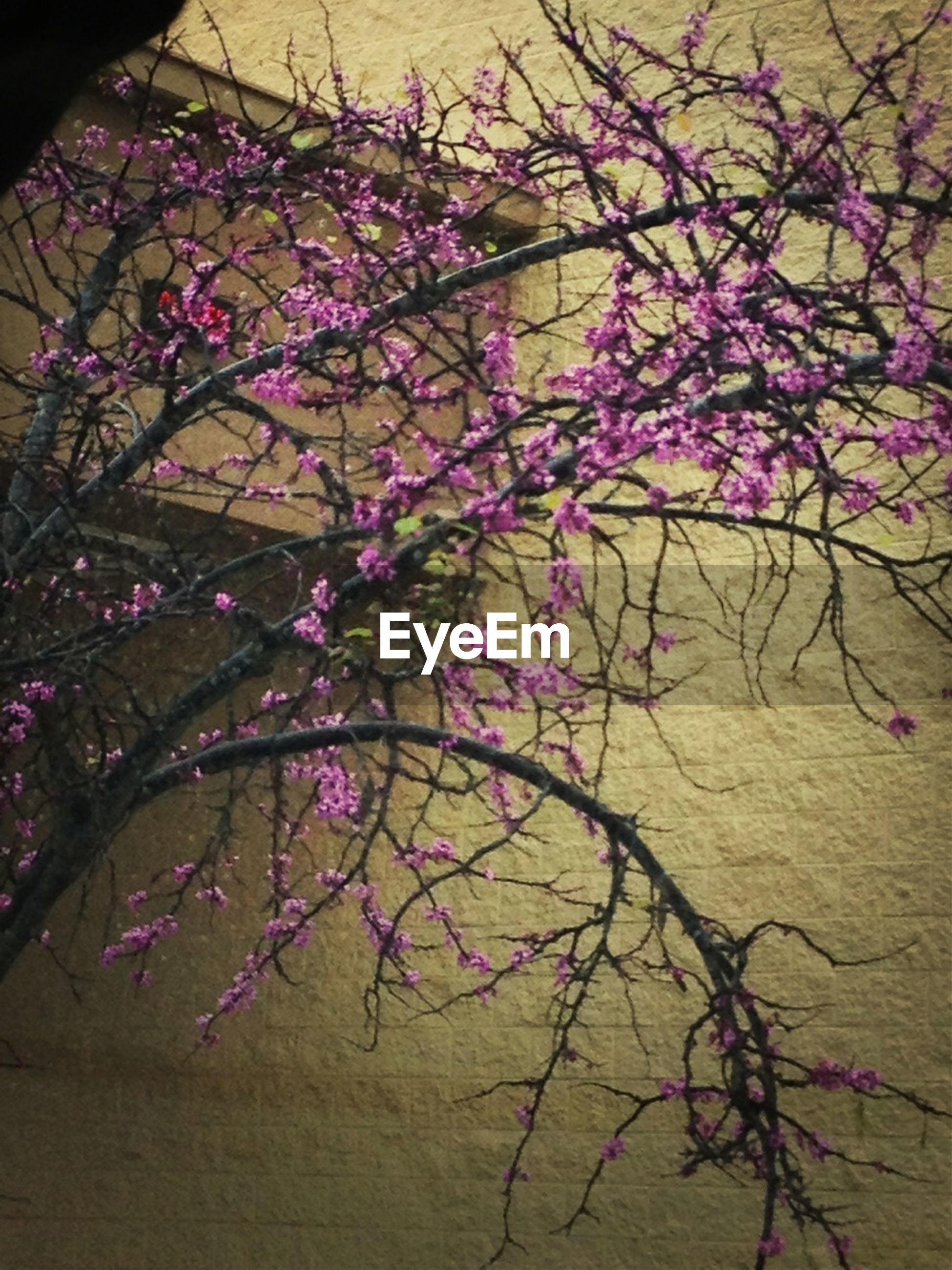 flower, branch, built structure, tree, growth, pink color, wall - building feature, architecture, low angle view, nature, plant, fragility, building exterior, no people, decoration, outdoors, day, wall, multi colored, blossom