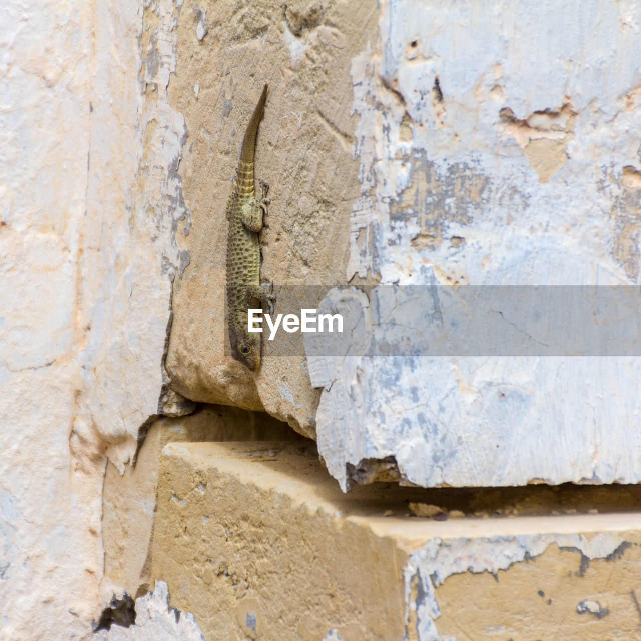 architecture, wall - building feature, close-up, no people, built structure, old, craft, day, outdoors, the past, history, art and craft, textured, backgrounds, damaged, carving - craft product, building exterior, full frame, solid, weathered