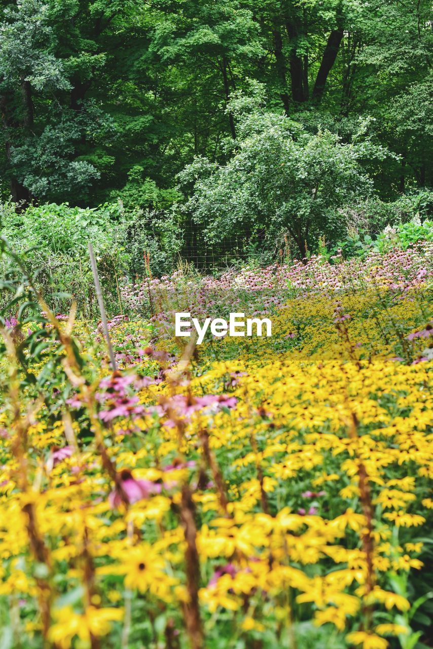 plant, flower, flowering plant, growth, beauty in nature, yellow, freshness, nature, selective focus, vulnerability, land, no people, tranquility, day, fragility, tree, field, outdoors, springtime, green color, flowerbed