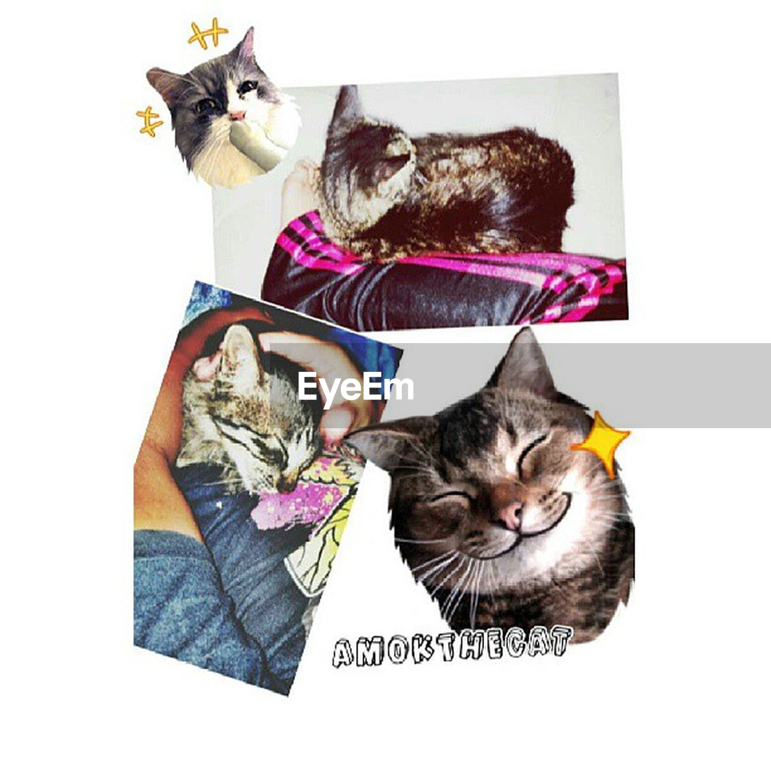 animal themes, domestic animals, pets, domestic cat, cat, mammal, one animal, feline, indoors, two animals, looking at camera, portrait, white background, togetherness, young animal, studio shot, full length, auto post production filter, animal representation, high angle view