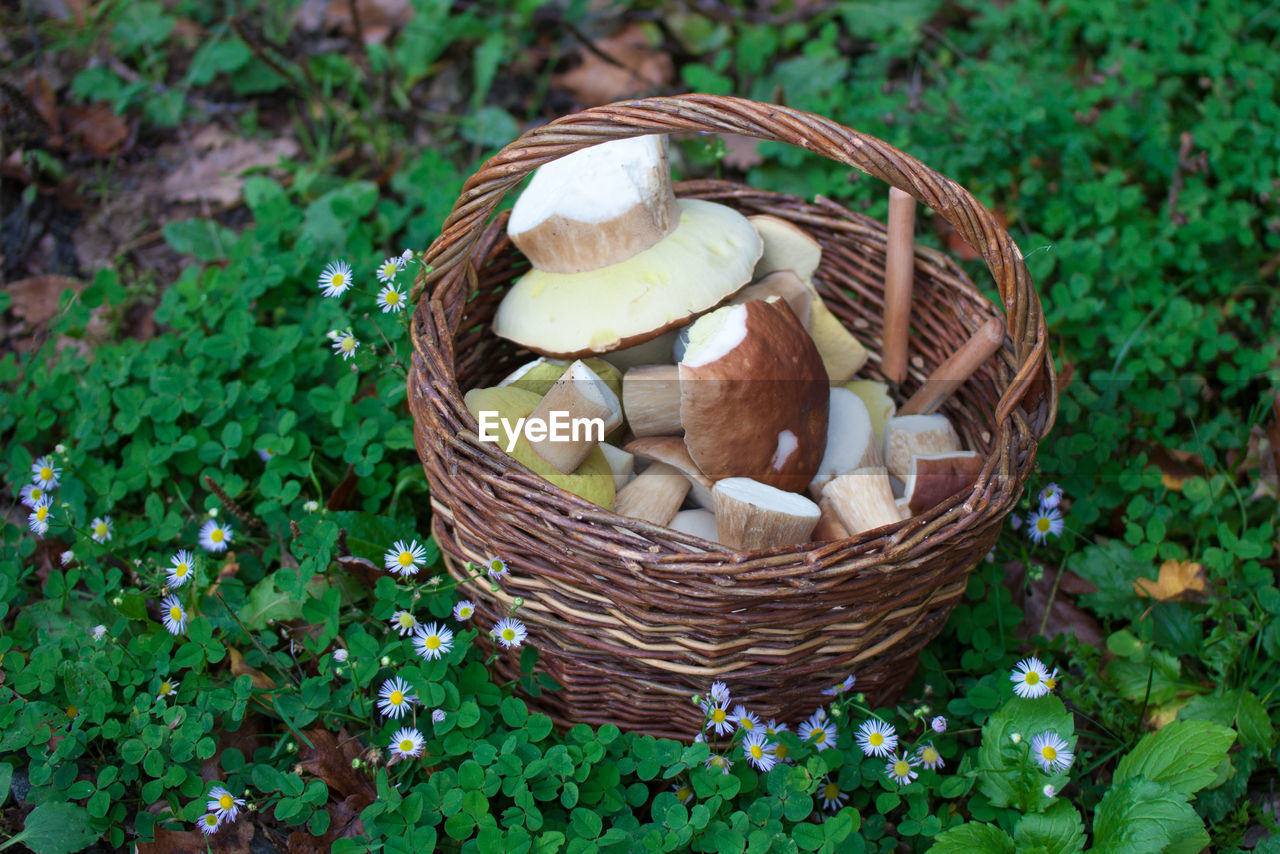 basket, container, mushroom, food and drink, food, freshness, green color, plant, edible mushroom, vegetable, day, fungus, wicker, no people, high angle view, nature, growth, healthy eating, land, outdoors