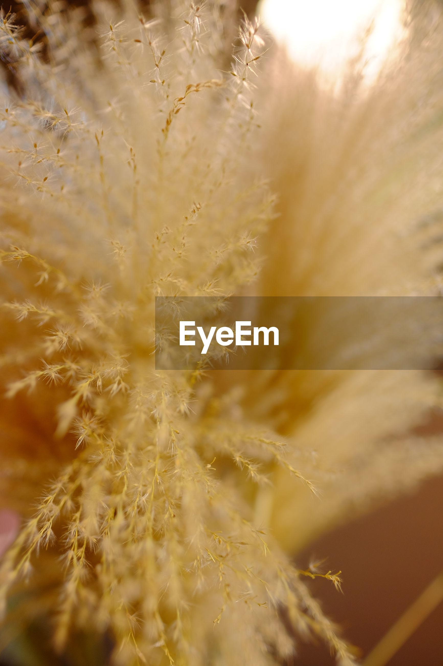 MACRO SHOT OF YELLOW FLOWERING PLANTS