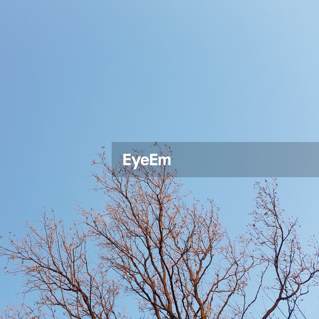 tree, nature, low angle view, clear sky, branch, blue, beauty in nature, no people, tranquility, outdoors, day, growth, sky