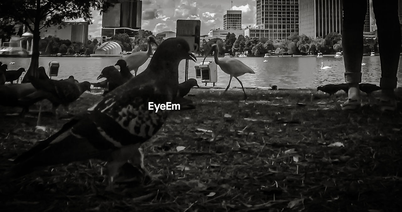 bird, animal themes, built structure, architecture, building exterior, animals in the wild, outdoors, city, day, real people, nature, water