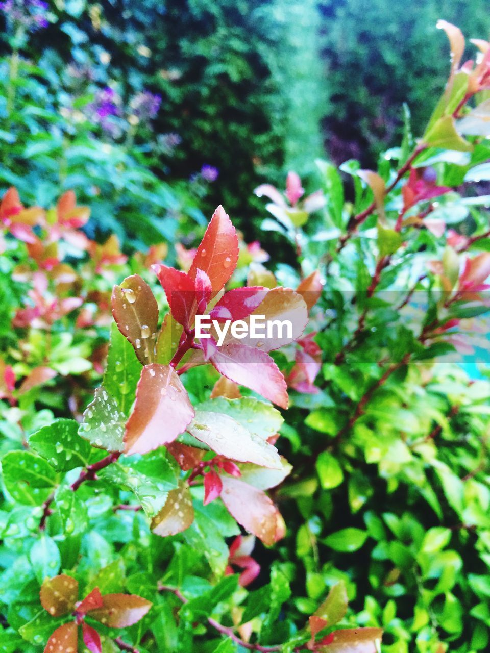 fragility, nature, beauty in nature, petal, growth, flower, no people, pink color, day, close-up, leaf, outdoors, plant, freshness, flower head, water, blooming