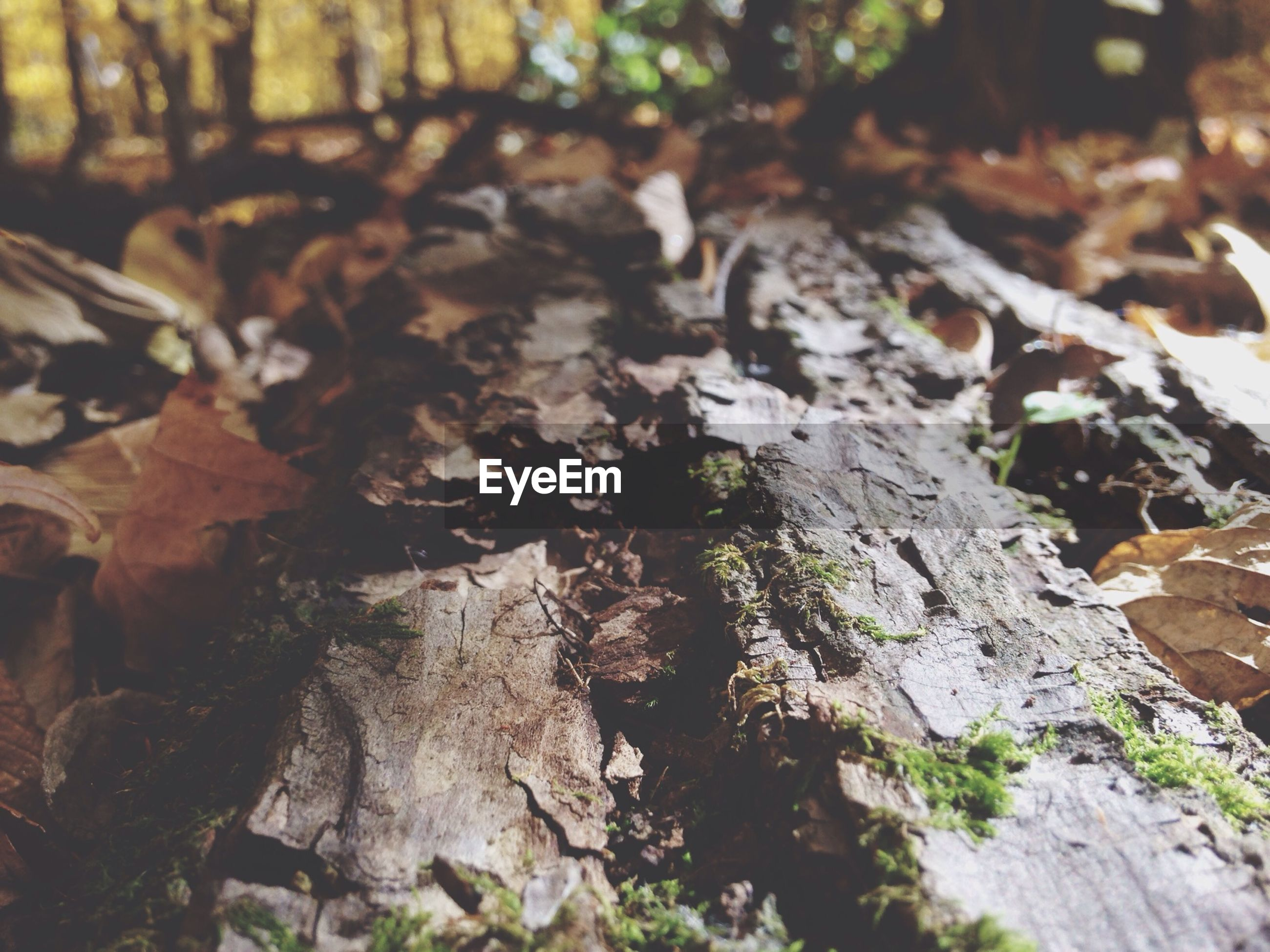textured, tree trunk, close-up, nature, tree, rough, growth, focus on foreground, bark, forest, moss, rock - object, tranquility, day, leaf, natural pattern, outdoors, selective focus, no people, wood - material