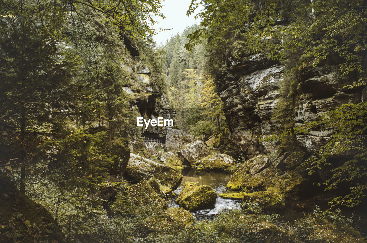 tree, plant, rock, rock - object, solid, nature, beauty in nature, forest, day, land, growth, tranquility, water, scenics - nature, flowing water, outdoors, rock formation, tranquil scene, non-urban scene, no people, flowing