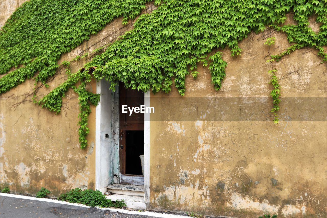 architecture, built structure, building exterior, building, door, entrance, house, no people, plant, green color, wall - building feature, day, ivy, growth, leaf, window, old, plant part, nature, residential district, outdoors