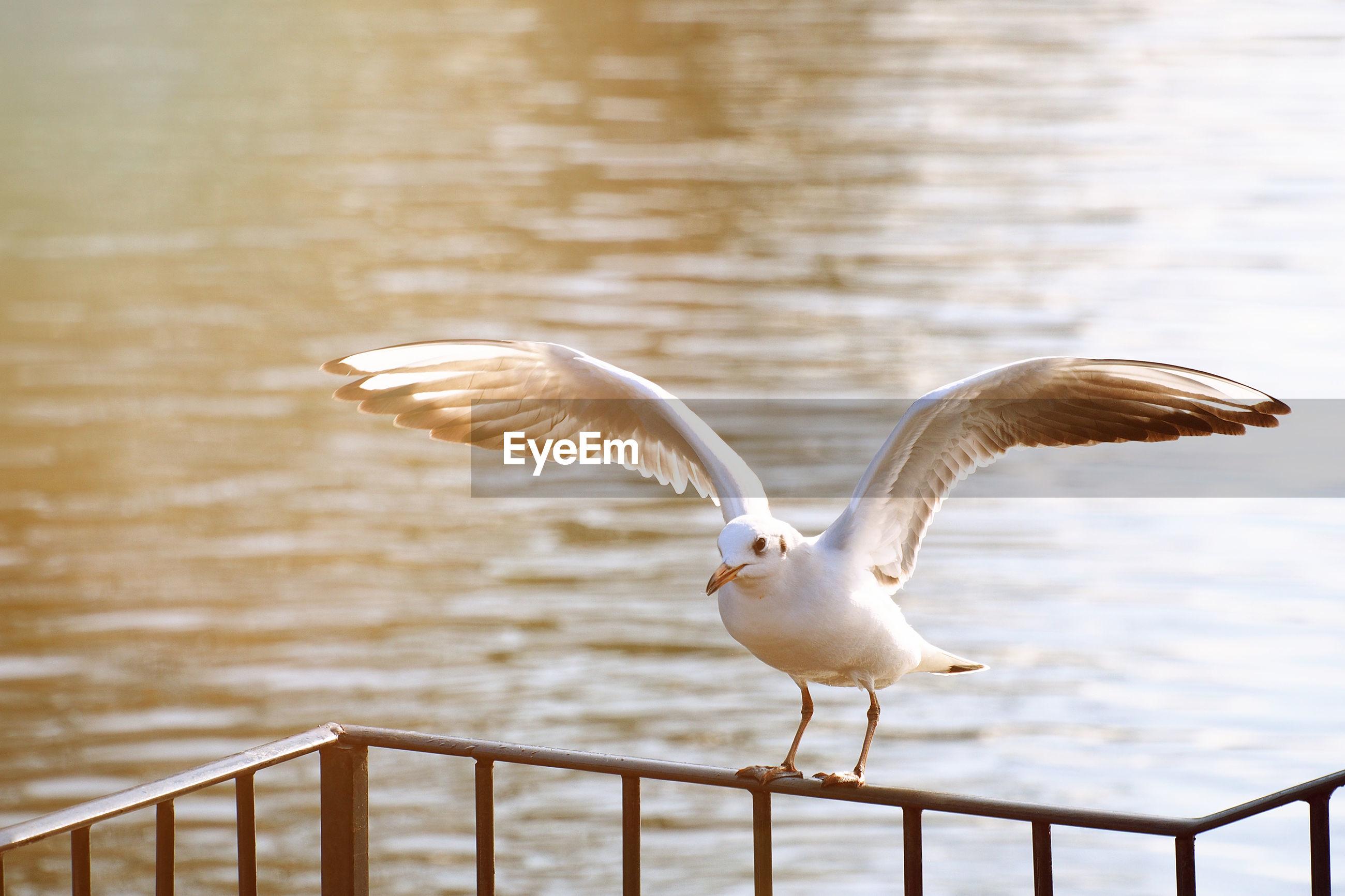 Bird perching by lake