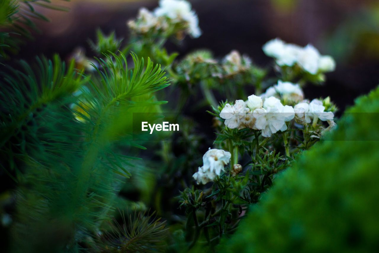 nature, green color, growth, beauty in nature, flower, no people, plant, day, close-up, fragility, outdoors, freshness