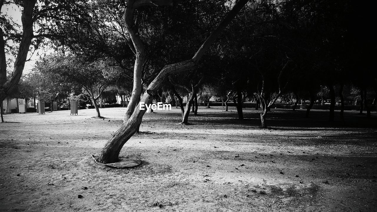 plant, tree, park, park - man made space, trunk, tree trunk, nature, growth, day, outdoors, no people, tranquility, empty, grass, land, beauty in nature, field, absence, environment, treelined