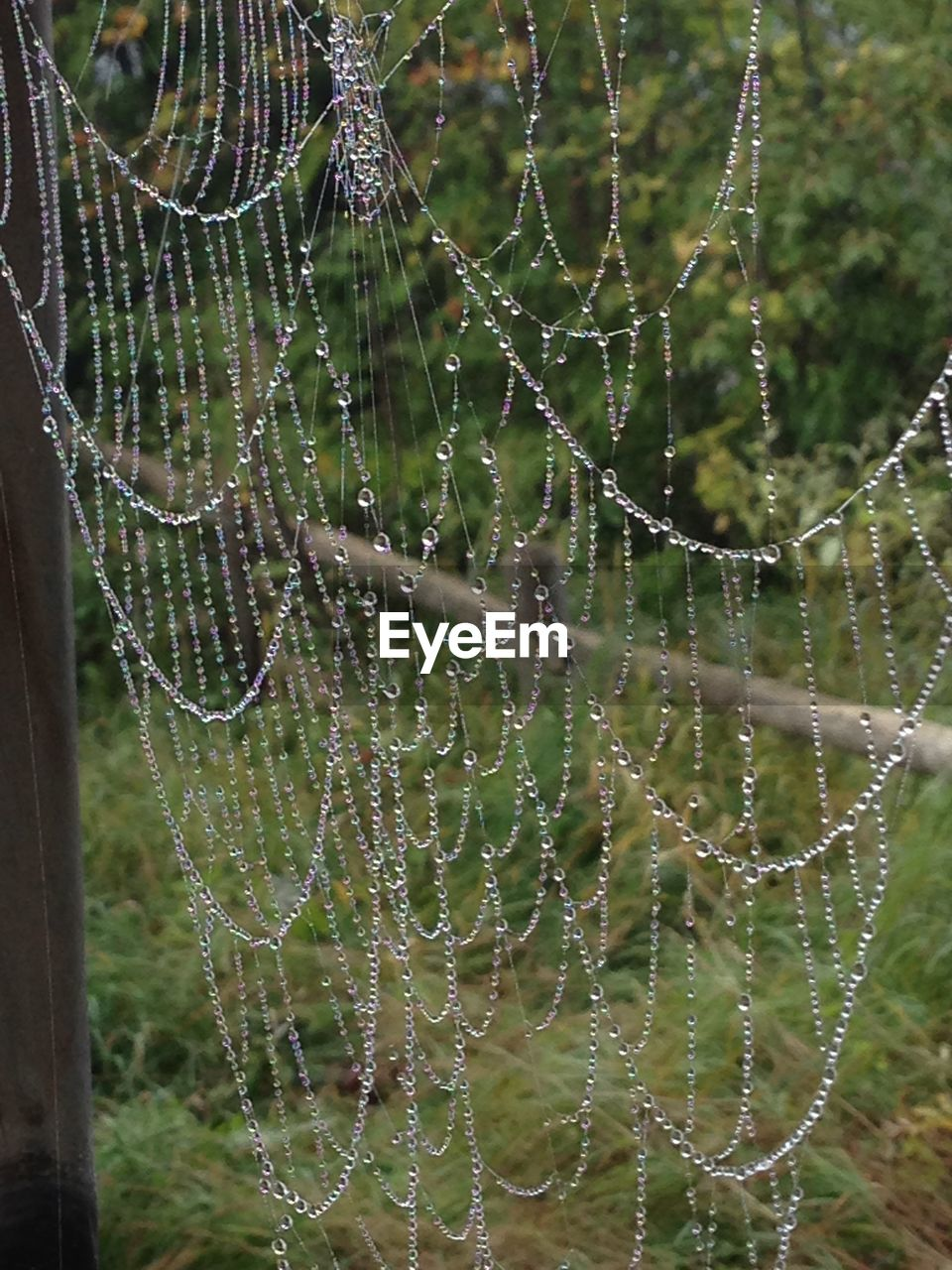 spider web, fragility, vulnerability, focus on foreground, close-up, nature, complexity, beauty in nature, no people, water, day, trapped, spider, drop, outdoors, wet, natural pattern, plant, animal, web, dew