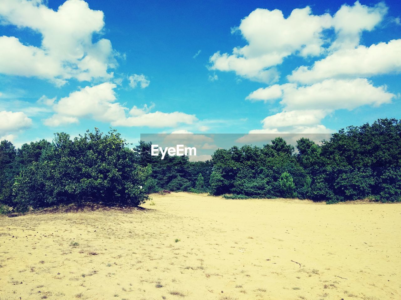 tree, cloud - sky, sky, nature, scenics, tranquil scene, tranquility, beauty in nature, no people, landscape, day, sand, growth, outdoors