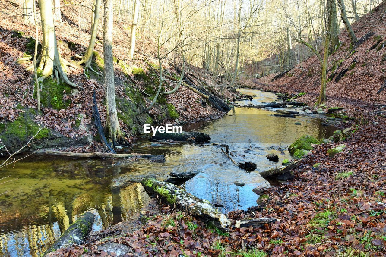water, tree, forest, plant, tranquility, nature, land, beauty in nature, river, no people, tranquil scene, day, scenics - nature, growth, non-urban scene, plant part, outdoors, flowing water, woodland, stream - flowing water, flowing, change, floating on water