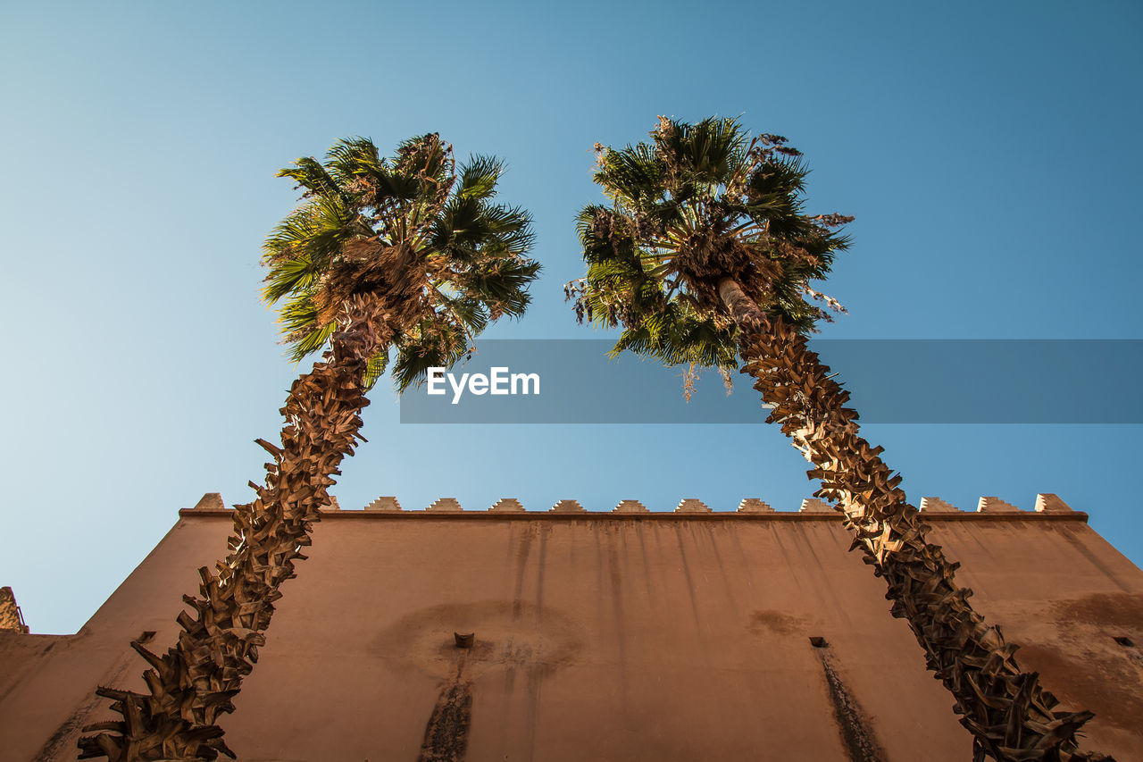 sky, low angle view, clear sky, architecture, plant, tree, nature, tropical climate, palm tree, built structure, history, the past, blue, growth, no people, day, sunlight, building exterior, travel destinations, outdoors, ancient civilization, arid climate