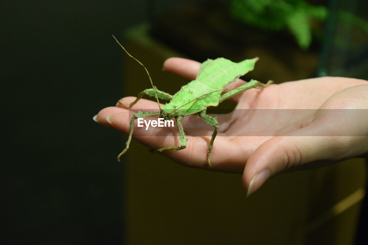 human hand, hand, human body part, animal wildlife, one person, one animal, animals in the wild, green color, holding, insect, invertebrate, real people, close-up, body part, unrecognizable person, focus on foreground, finger, outdoors, small
