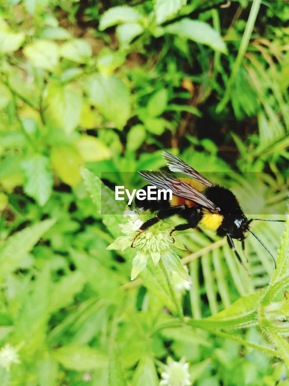 animals in the wild, insect, animal wildlife, animal themes, one animal, animal, invertebrate, plant, green color, beauty in nature, plant part, leaf, close-up, growth, day, nature, focus on foreground, no people, animal wing, selective focus, outdoors, pollination